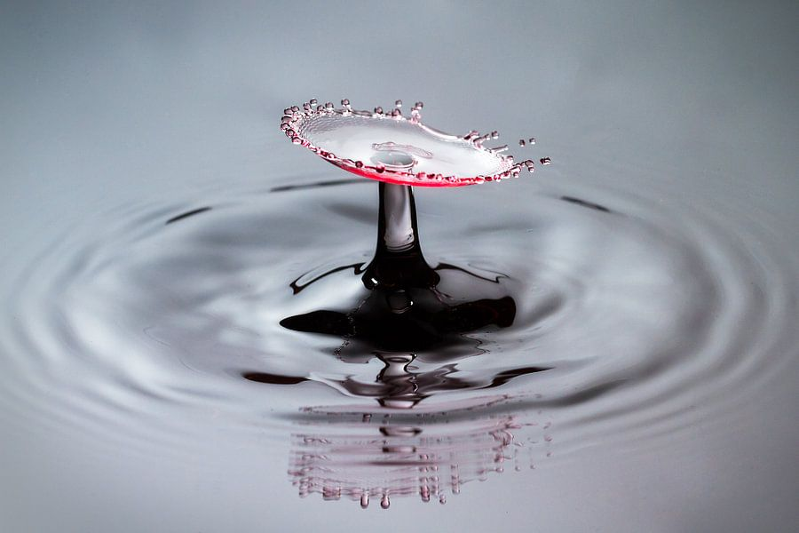 Rode splash