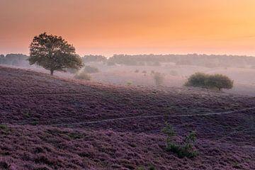 Sonnenaufgang auf der Posbank Veluwe von Midi010 Fotografie