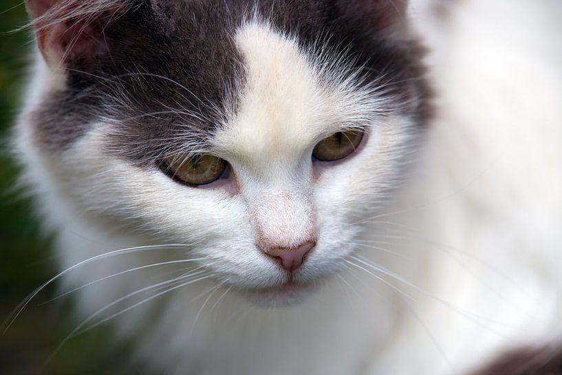 Katze von BVpix