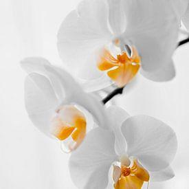 gele orchidee van Mariska Hofman