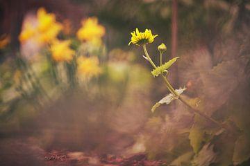 Frühblüher von Foto Oger