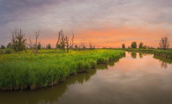 Sunset Oostvaardersplassen van Xander Haenen