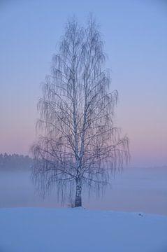 tree von Victor Van Rooij
