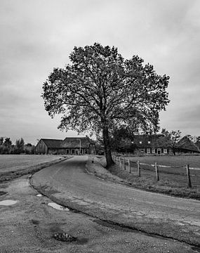 Naturschutzgebiet Moerenburg bewölkt und grau von Freddie de Roeck