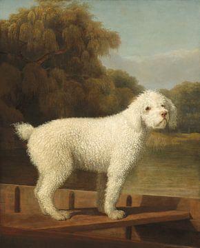 Caniche blanc en chasse, George Stubbs
