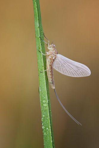 insect van