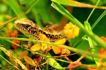 Salamander in het groen von Assia Hiemstra