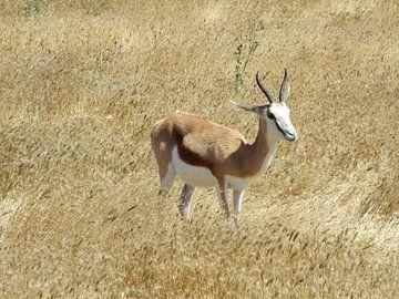Impala van Mirjam Otto