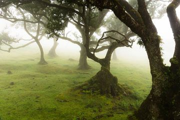 Bomen in de mist sur Michel van Kooten
