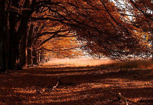 Autumn leaves 2 van