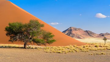 Namibia von Denis Feiner