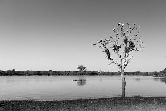 Ooievaars met nesten in boom. van Jan van Kemenade