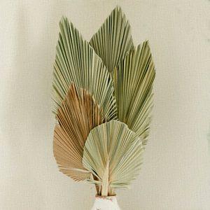 Nature morte feuilles de palmier séchées
