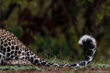 Luipaard staart (Masai Mara, Kenia) van
