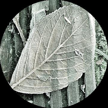Bevroren herfstbladeren van Ina Hölzel