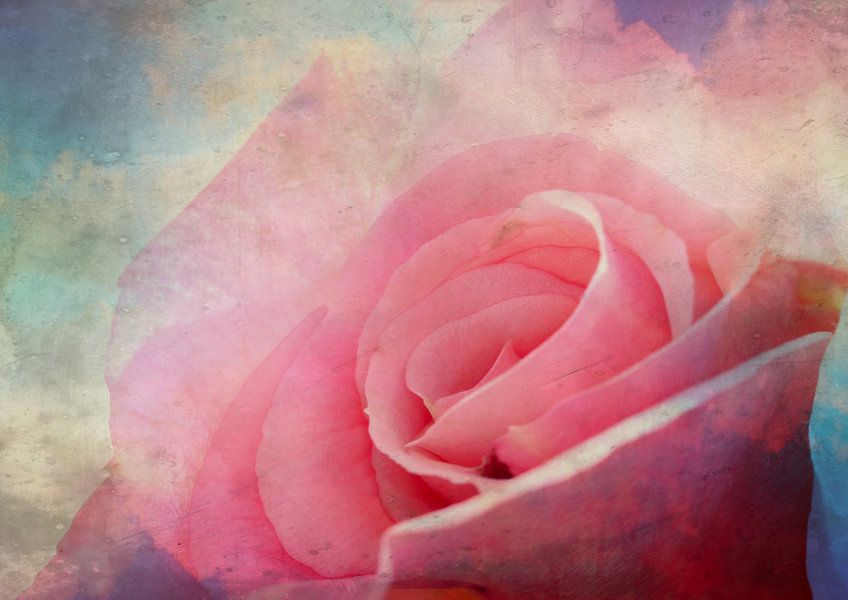 Zarte rosa Rose