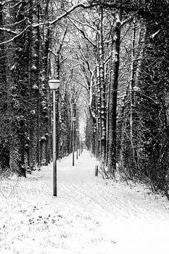 Winters beeld (2) - 2015 van Rob van der Pijll