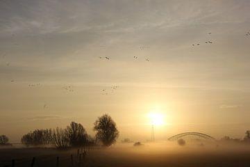Ganzen boven mistige Uiterwaarden Oosterbeek van Maarleveld Fotografie