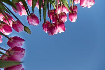 Tulpenpracht van Willy Sybesma