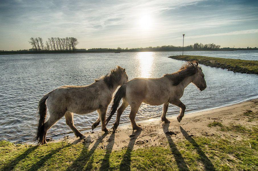 Paarden van Mark Bolijn