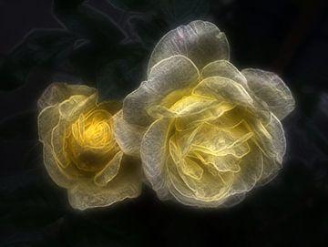 Rose 2 van