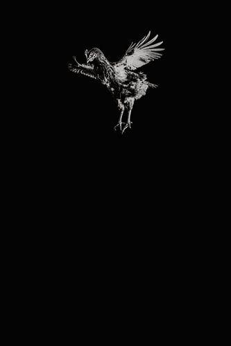 'Fly on the wall' vliegende kip zwart wit