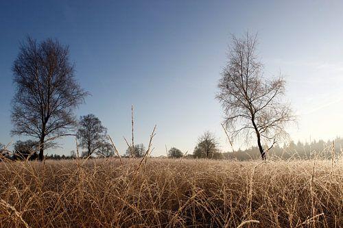 Deelense was in de winter