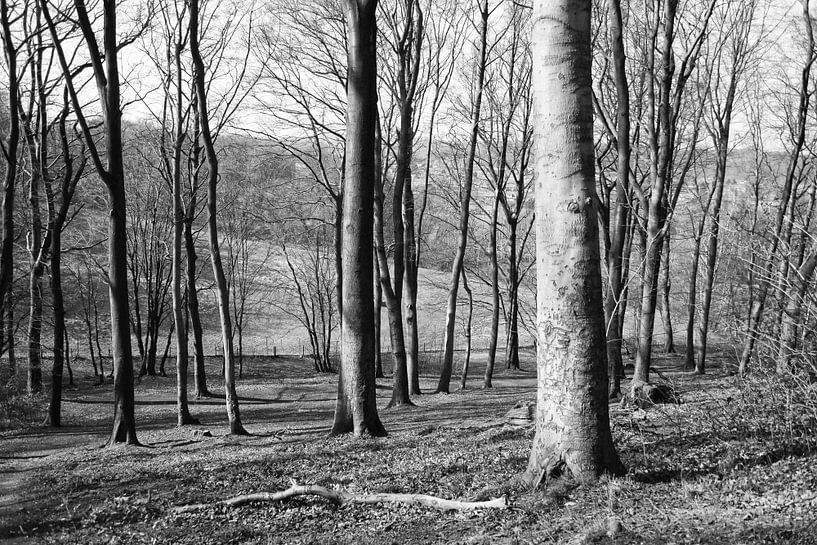 Forest van Peggy Neuteboom