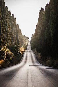 Bolgheri, Toscane, Italie van Stefan Lucassen