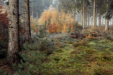 Mistig herfstbos met pastel tinten