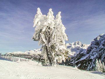 wind geblazen bomen van Christine Nöhmeier