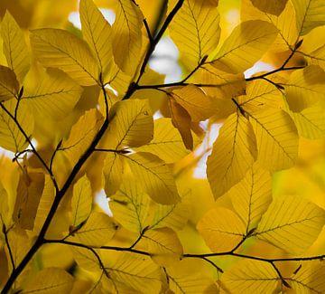 Herfstbladeren van Ingrid Ronde