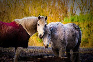 Paarden in het winterzonnetje van Raymond Meerbeek