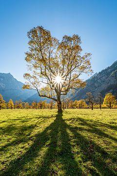 Herfst op de Großen Ahornboden van Michael Valjak