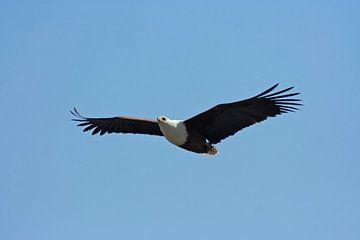 Eagle van Manuel Schulz