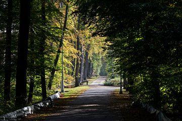 herfst in het bos von Compuinfoto .