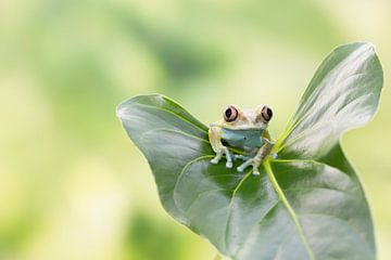 Lovely on a leaf van Joyce Beukenex