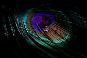 A travers l'œil d'une plume de paon