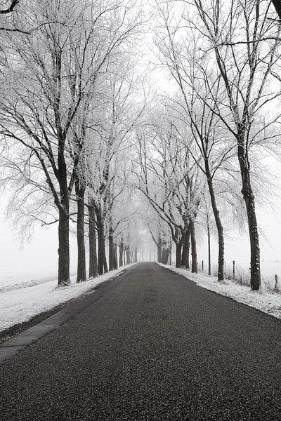 Landweg door een bevroren winters landschap in de IJsseldelta van Sjoerd van der Wal