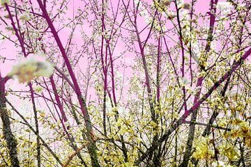 Pink Willow von Sonja Pixels