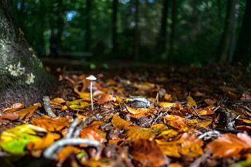 Sonnenlicht-Pilz von Fotografiecor .nl