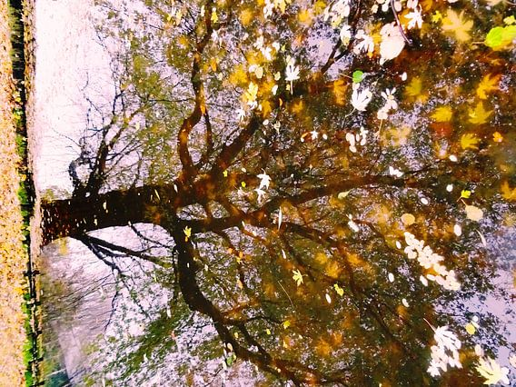 Tree Magic 145 van MoArt (Maurice Heuts)