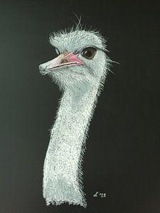 Struisvogel van Ellen Winder