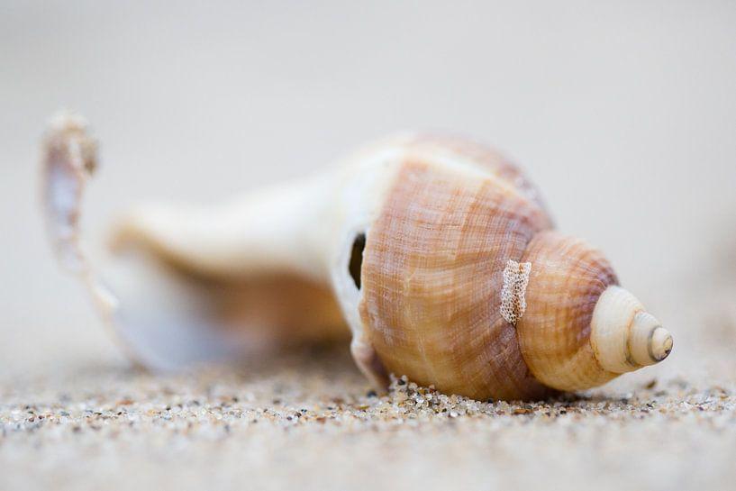 Zeeschelp op het strand van Judith Borremans