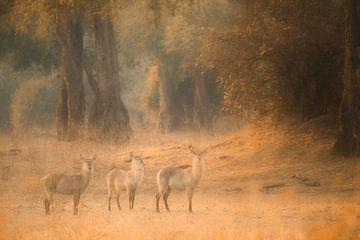In het sprookjesbos van Loulou Beavers