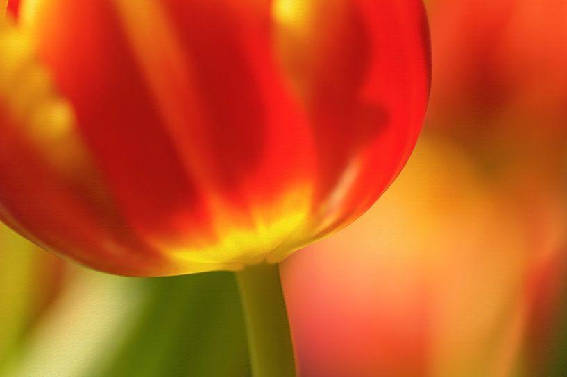 Abstract van een grote rode tulp van Birgitte Bergman