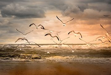 vliegende zeemeeuwen over het strand van Marinus Engbers