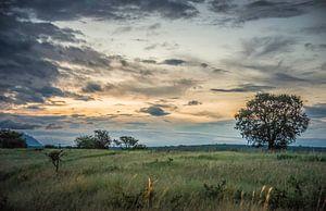 soirée dans le parc national kruger en afrique du sud