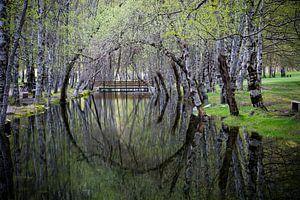 Cirkelvormige weerspiegeling van bomen in het water. van