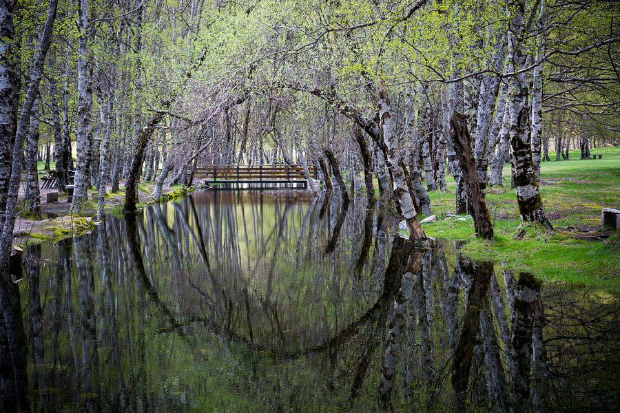 Cirkelvormige weerspiegeling van bomen in het water.